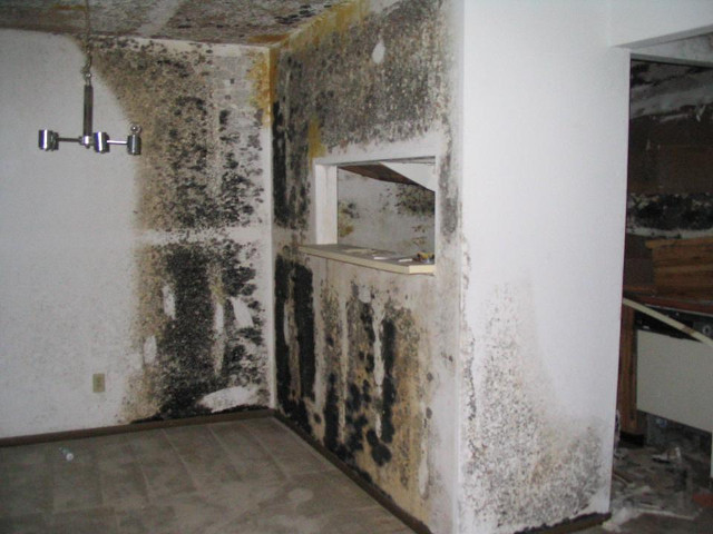 Mold inside a house